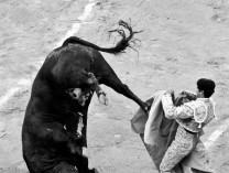 A photo of Alten's Bullfight