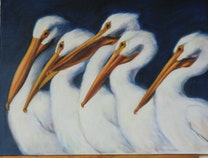 Photo of White Pelicans