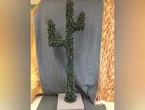 Photo of Cactus #2