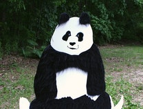 Photo of 'Yoga Bear'