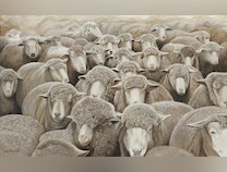 Photo of It's All About Ewe